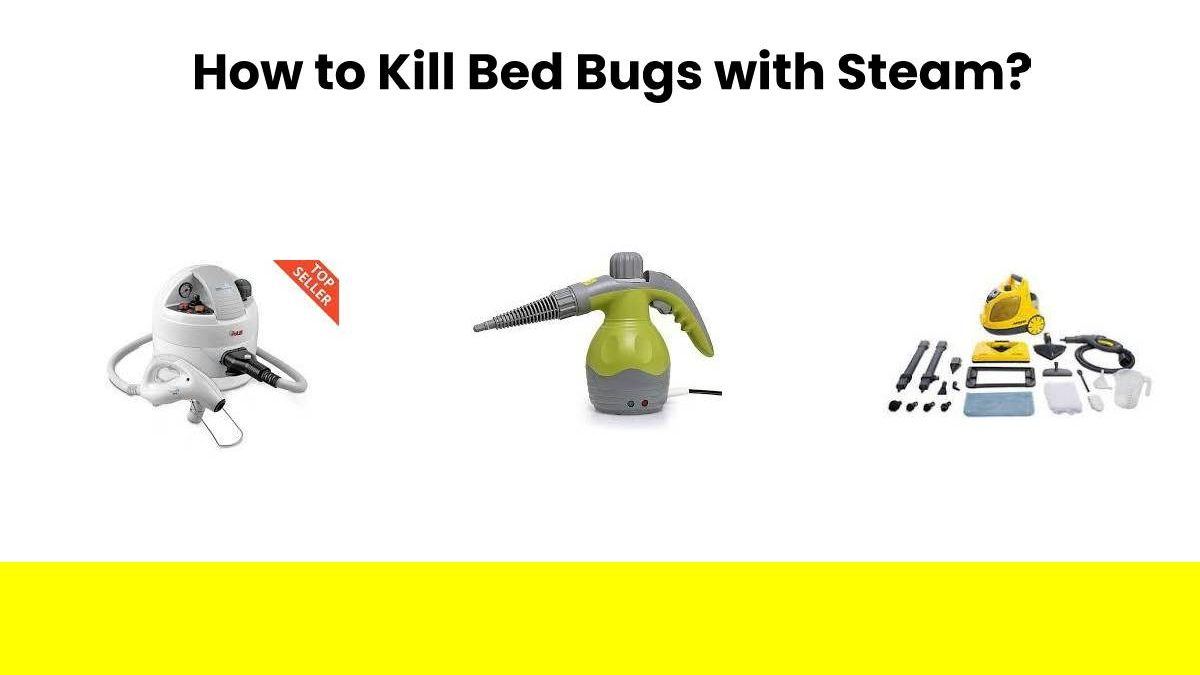 How to Kill Bed Bugs with Steam? – Computer Tech Reviews