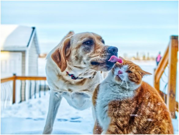 CBD Oil Products Specifically for Pets