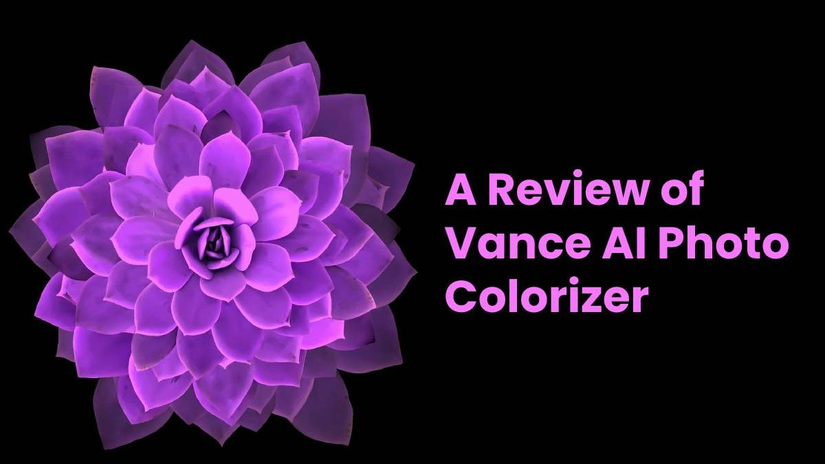 A Review of Vance AI Photo Colorizer