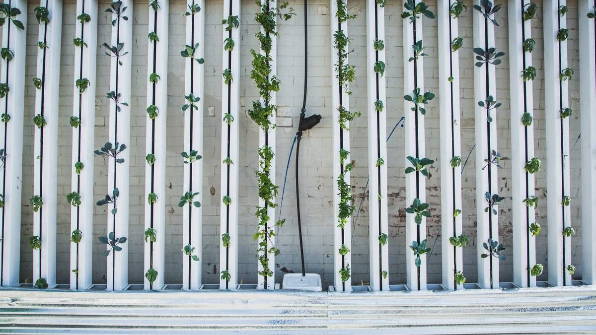 Which Lighting Tech Best Suites Vertical Farming?